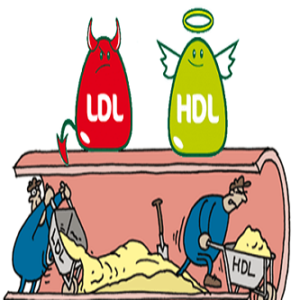 Mỡ máu cao là bệnh gì? Cách phòng ngừa và điều trị hiệu quả